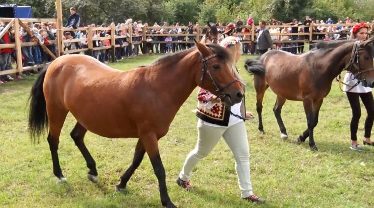 Свято українського коня відбулося в Житомирі
