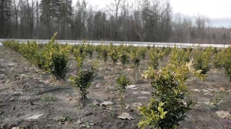 Як у Радовецькому лісництві дбають про якість майбутнього лісу