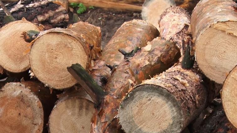 Мешканці мікрорайону Паперова фабрика прагнуть зберегти ліс