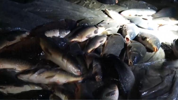 У Тетерів випустили 11 тонн риби