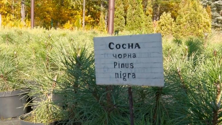 У Житомирському лісовому розсаднику вирощують понад 100 видів рослин