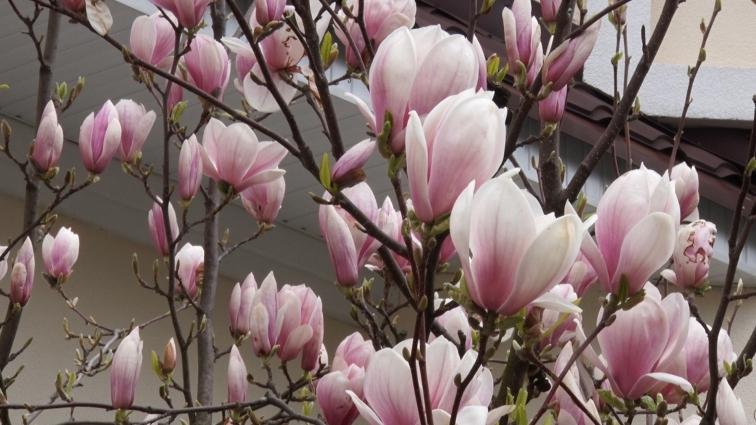 Де і які декоративні рослини потрібно висаджувати в Житомирі?