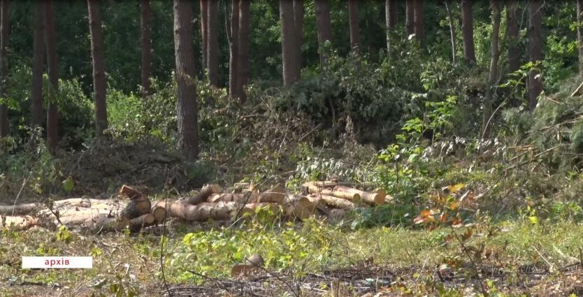 У Житомирській області розпочато масштабну перевірку роботи лісгоспів