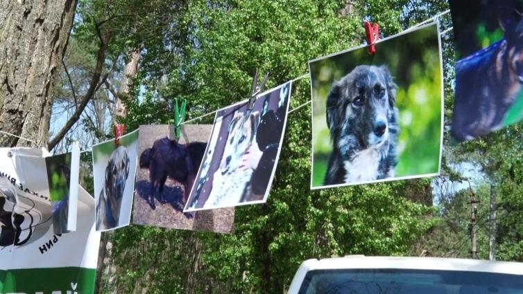 Акцію з прилаштування собак в сім'ї провели в Житомирі