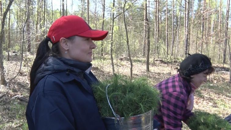 Працівники Житомирської обласної ради долучилися до акції «Майбутнє лісу в твоїх руках»