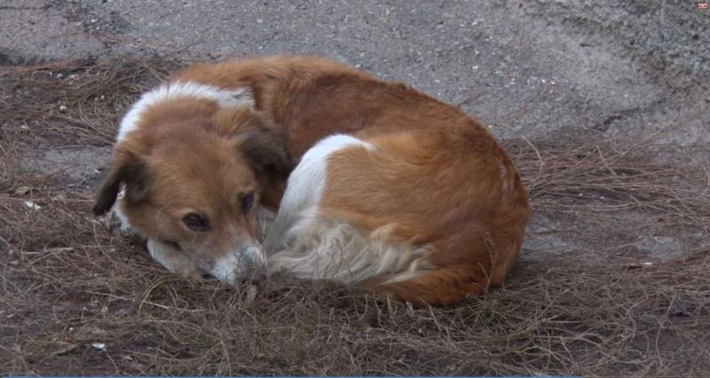 У Житомирі бродячі собаки нападають на людей