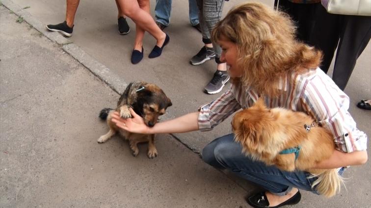 Небайдужі шукають господарів для врятованих псів