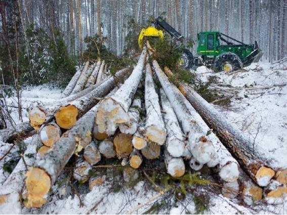 Лісівники розповіли про особливості санітарної рубки лісу