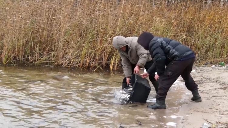 Приватний підприємець зарибнює Іршанське водосховище