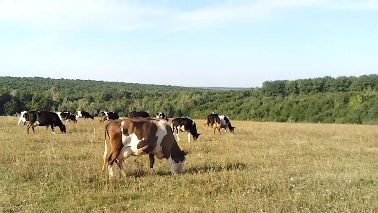 Село Зарубинці позбавили пасовища