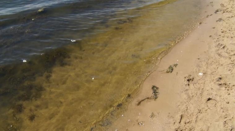 Водорості у воді на пляжі обурюють відпочивальників