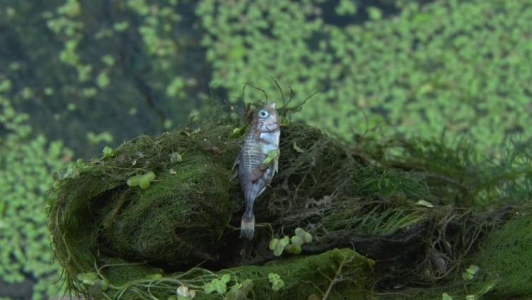 Рибалки обурені: масове отруєння риби в Тетереві