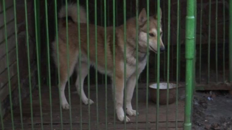 Мисливські собаки спричинили конфлікт між жителями області