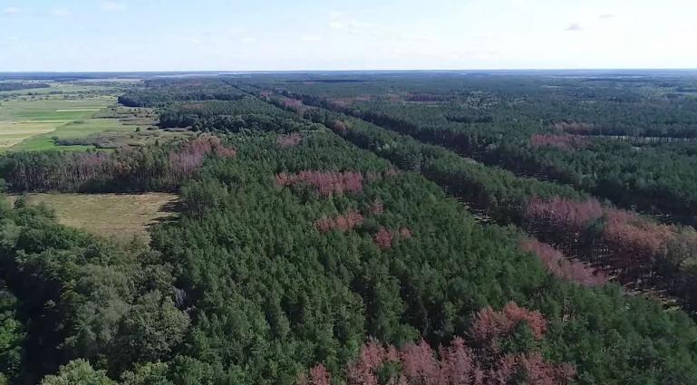 Короїд знищив понад 40 тисяч гектарів лісу Житомирщини