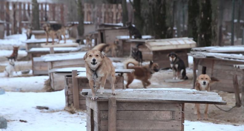 Собаче щастя: на Житомирщині діє Притулок для бездомних собак