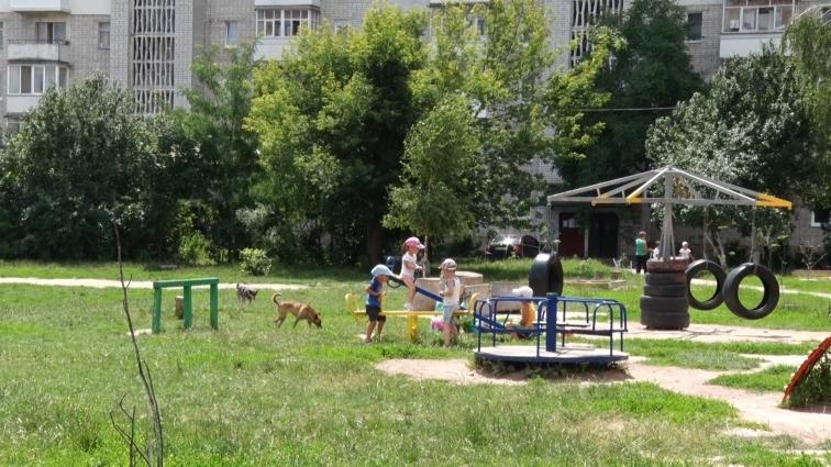 Майданчик для собак у Житомирі планують облаштувати на вул. Героїв Десантників, 23