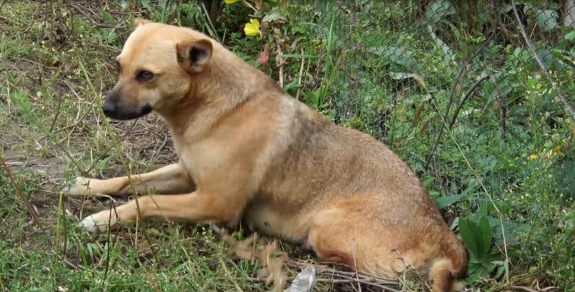 Собака, яка потрапила в капкан у передмісті Житомира, шукає притулок