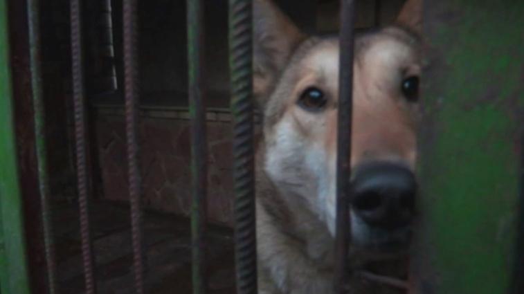 У Баранівському районі застрелили двох цінних псів