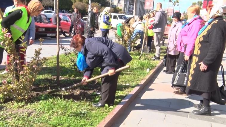 Пенсіонери висадили дерева на вулиці Героїв Небесної сотні