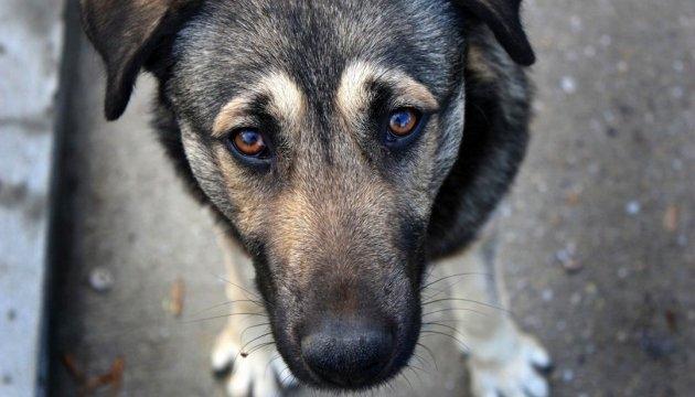 У Житомирі затвердили програму «Місто дружнє до тварин»