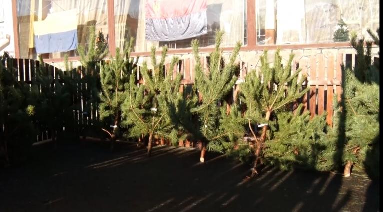 31 грудня продавці ялинок традиційно обіцяють розпродажі