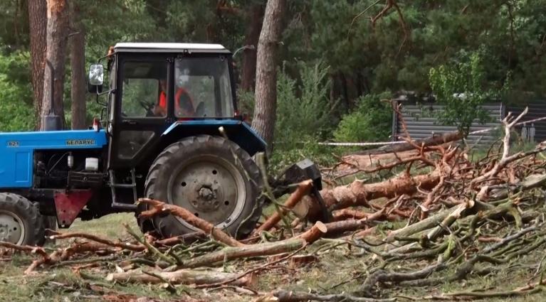 У Житомирському гідропарку зрізали 200 дерев